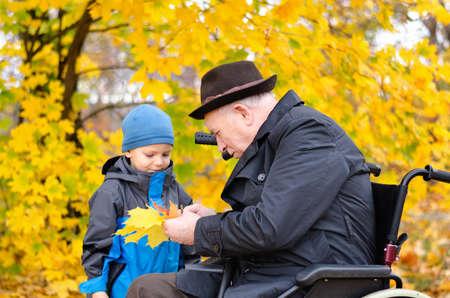 persona en silla de ruedas: Hombre lisiado mayor que se sienta en una silla de ruedas que juega con su nieto joven linda recoger hojas de colores al aire libre