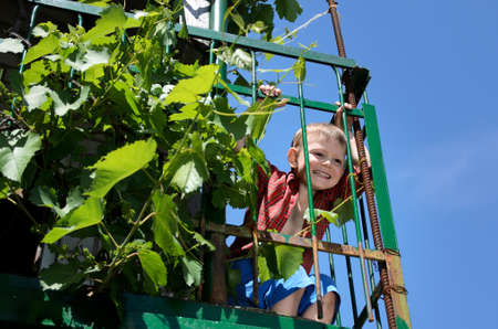 Excited little boy playing on an elevated patio hanging onto the green metal railing alongside a leafy vine with a cheeky grin against a blue sky