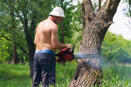 View from behind of a shirtless man using a chainsaw to fell a tree for camping fuel, logging for lumber or doing tree surgery photo