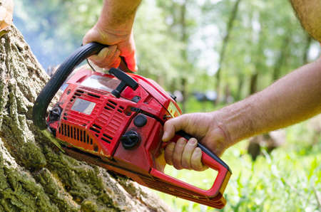 felling: Man using a portable two-stroke petrol chainsaw to fell a tree trunk, closeup of his hands and the engine of the equipment
