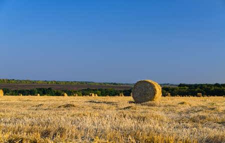 land use: Balle di fieno rotonde in un campo agricolo di recente falciato sotto un cielo azzurro pieno di sole, una balla in primo piano Archivio Fotografico