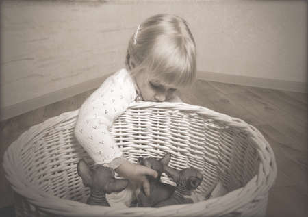 SphynxClose up Little Blond Girl Touching the Sphynx Kittens Resting in a Wooden Basket photo
