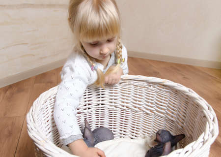 Little blond girl with pigtails holding a small grey and white sphynx kitten above a rustic wooden basket photo