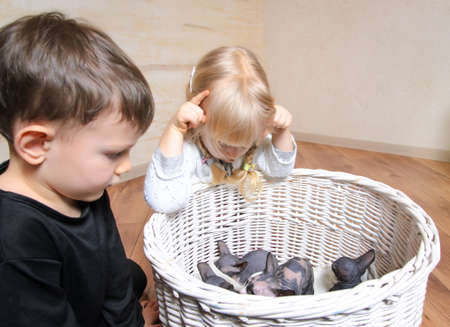 mesmerized: Two young children watching a litter of small grey and white sphynx kittens in a white wicker basket indoors in the house Stock Photo