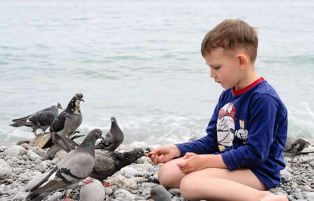 child on beach: White Young Boy Sitting on the Stones at the Beach While Feeding Plenty of Gray Dove Birds.