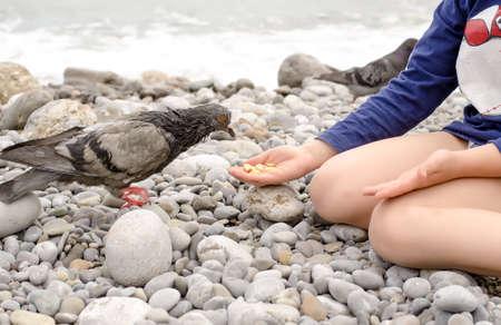 animal lover: Amante animal joven ni�o se sienta en las piedras mientras se alimenta Paloma P�jaro Usando las Manos Descubiertas