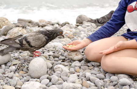 animal lover: Animal Lover Young Kid Sits on the Stones While Feeding Dove Bird Using Bare Hand