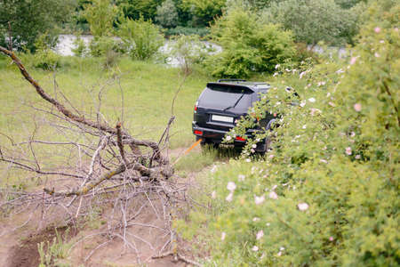 dragging: Black SUV Truck Dragging Dead Bare Tree Branch Through Field Near River
