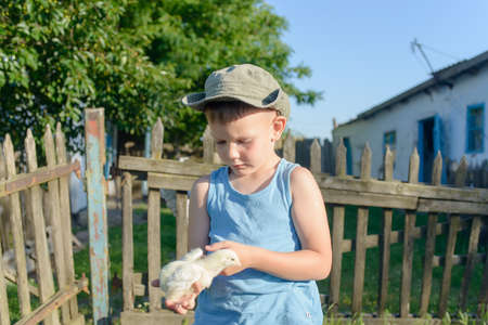 Cute White Young Boy Holding His Little Chick While at the Grassy Garden and Ready to Play. photo