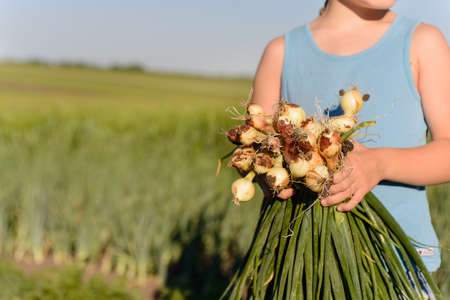 little boys: Cute White Young Boy Holding Green Onions Harvested at the Farm While Looking Into Distance