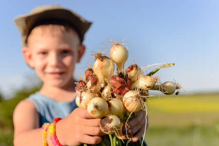 farm boys: Little boy displaying a bunch of fresh onions in his hands with a smile that he has just harvested on the farm