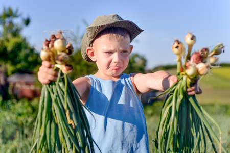 bunches: Smiling little boy with bunches of freshly harvested onions that he has just picked from a field on a farm