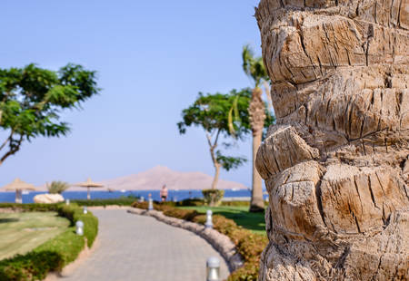symbolic: Palm tree trunk with a view beyond of a road leading to a tropical beach at a resort and calm blue ocean, symbolic of a summer vacation