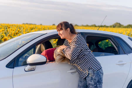 playful behaviour: Two women fighting in a car with one standing outside in the road gripping the female driver by the hair - car parked on a rural road alongside sunflowers