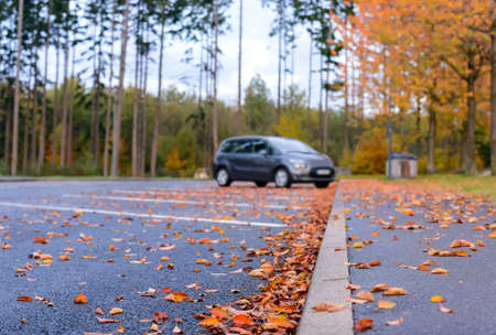 Dried brown and colorful red autumn or fall leaves lying scattered on the asphalt in a parking lot in a concept of seasons, low angle view along the curb Stock Photo
