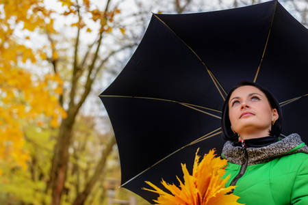Low angle view looking up of an attractive young woman collecting bright yellow autumn leaves while sheltering under an umbrella Stock Photo