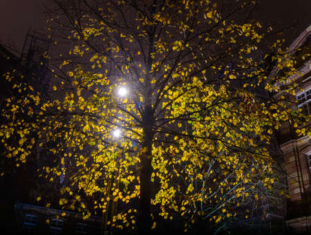 after hours: City lantern light through the leaves of autumn tree Stock Photo