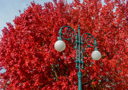 grandeur: Street light lamp on background of branches of autumn beautiful bright red colored leaves of tree wonderful grandeur of nature cute postcard on natural background outdoor