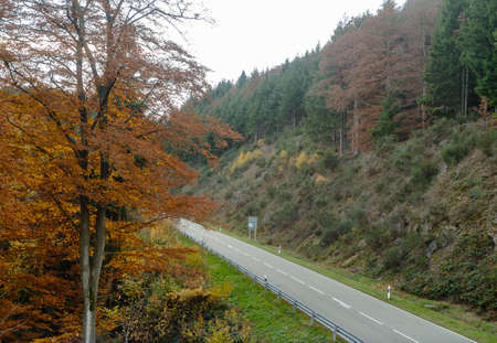 timberland: Asphalt road is running along the slope overgrown with coniferous forest. Stock Photo