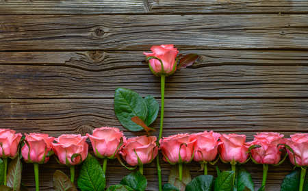 well loved: Border of romantic pink fresh roses with a single longer stemmed rose in the center on a rustic wooden background with copy space for your Valentines message