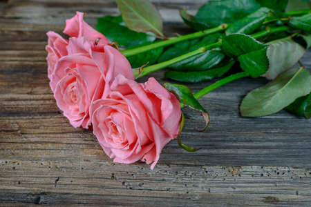 well loved: Close up on bundle of beautiful stemmed pink roses over old wooden table at angle