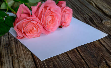 well loved: Three pink rose blooms in corner over blank white sheet of paper on wood table