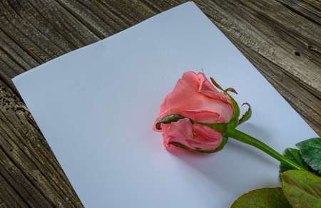 well loved: Pink rose in corner over blank white sheet of paper on wood table