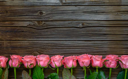 well loved: Side border of beautiful fresh pink roses symbolic of love and romance on a rustic wood background for Valentines Day, Mothers Day, anniversary or wedding