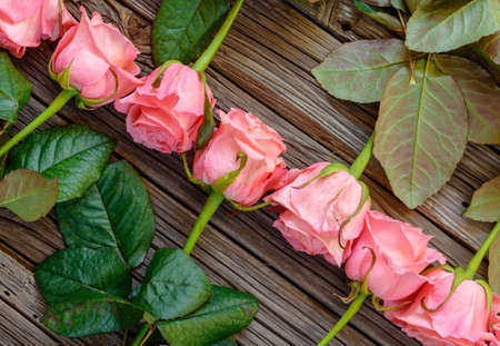 angled view: Close up angled view on reverse facing rows of neatly arranged pink stemmed roses over wooden table background
