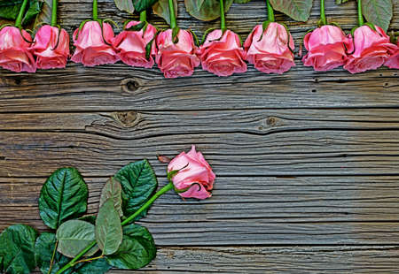 well loved: Various stemmed pink roses over weathered wooden rustic Valentines Day background with copy space