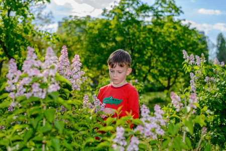 glum: Handsome little boy standing outdoors amongst fresh green spring foliage collecting a bunch of fresh lilac flowers with a serious expression