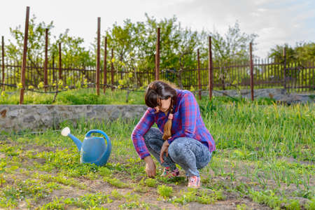 squatting: Woman squatting weeding seedlings in her vegetable patch in the garden with a blue watering can alongside her