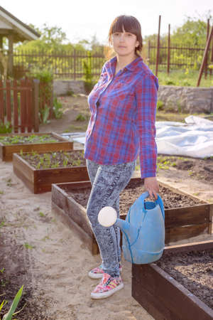 transplanted: Middle-aged attractive woman doing the watering standing in the vegetable garden amongst raised beds holding a watering can