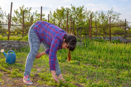 bending down: Woman busy weeding her vegetable patch in the garden bending down to manually remove weeds from seedlings