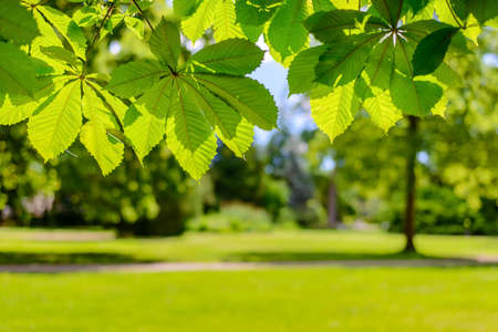 changing seasons: Fresh green spring leaves border over a background of a lush lawn in a park or large garden in a conceptual image of changing seasons and the ecology