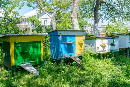 mellifera: Row of beehives in a garden or apiary with bees flying in an out set up in the shade of trees