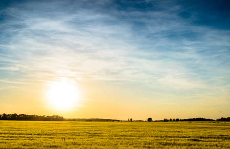 golden light: Large flat field of ripening wheat at sunset with the fiery orb of the sun low in the sky backlighting the crop in golden light Stock Photo