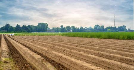 arando: Gran terreno con montículos de tierra después de haber sido arado de bosque y otras parcelas no