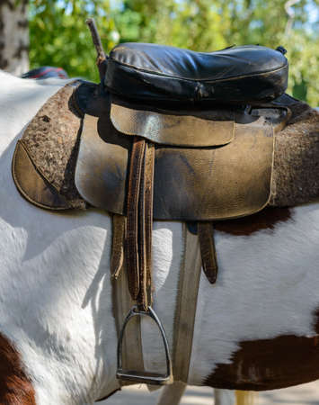 Saddle on a small white and brown piebald pony in a close up view outdoors under leafy green trees Stock Photo