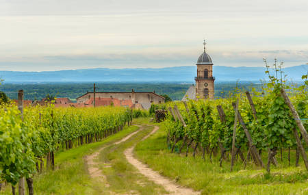 Rural farm track meandering through a summer vineyard towards a distant town or village with church steeple in a scenic rural landscape Editorial