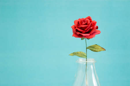 copy: Rose on blue background with copy space