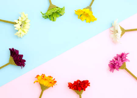 Colorful flowers frame on blue and pink background flat lay, top view