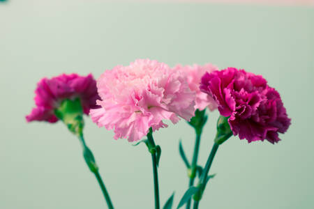 Bouquet of Carnations. Retro effect style. Banco de Imagens