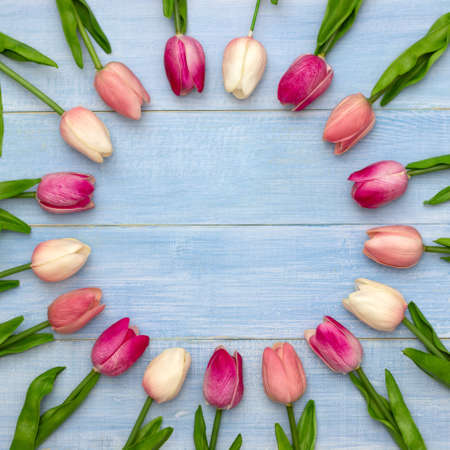 Pink tulip flowers on blue wooden table. Top view with copy space. Flat lay. 版權商用圖片