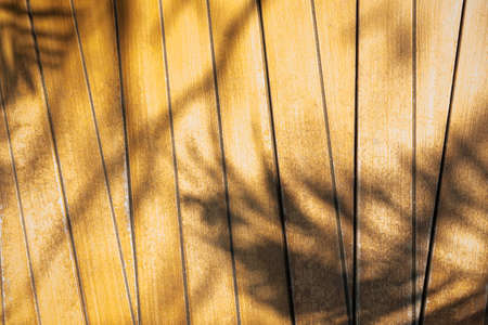 Abstract background of shadows palm leaves on wooden wall. Stock Photo