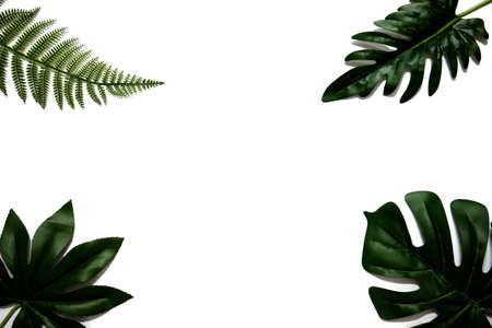 Flat lay of green tropical leaves on white background with copy space. Vacation holiday travel in summer season concept. Minimal style. Stockfoto