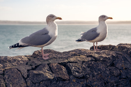 Seagulls standing on a wall by the sea