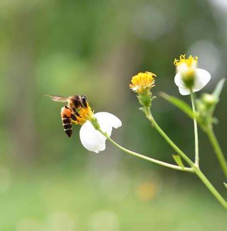Bienen auf einer Blume