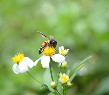 Bees to a flower