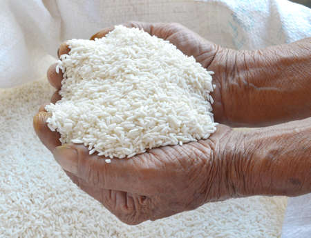 Arroz en la mano agricultor photo